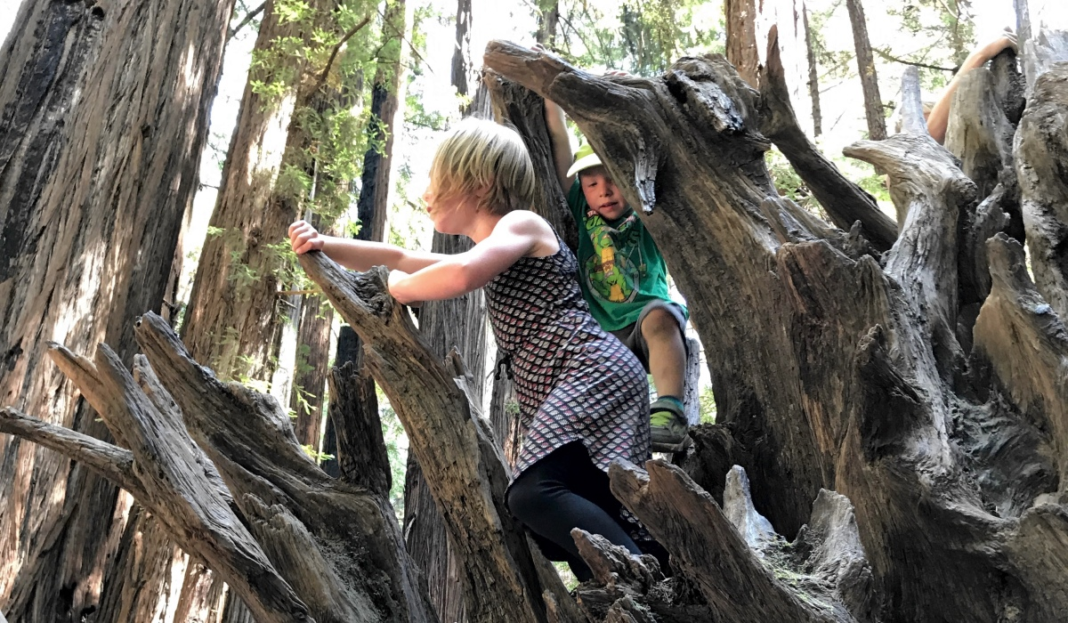 Towering Redwoods & Floating the Russian River, a Perfect Family Adventure Day in Guerneville