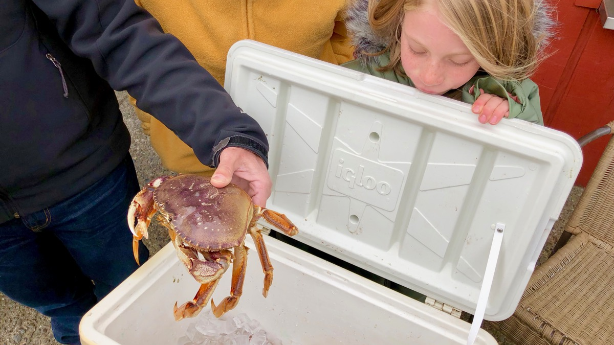 Fresh Dungeness Crab in Bodega, A Holiday Meal to Remember